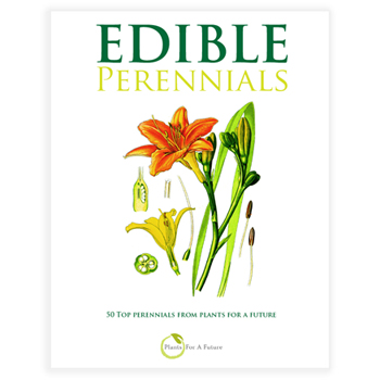 Perennial_Cover_eBook2